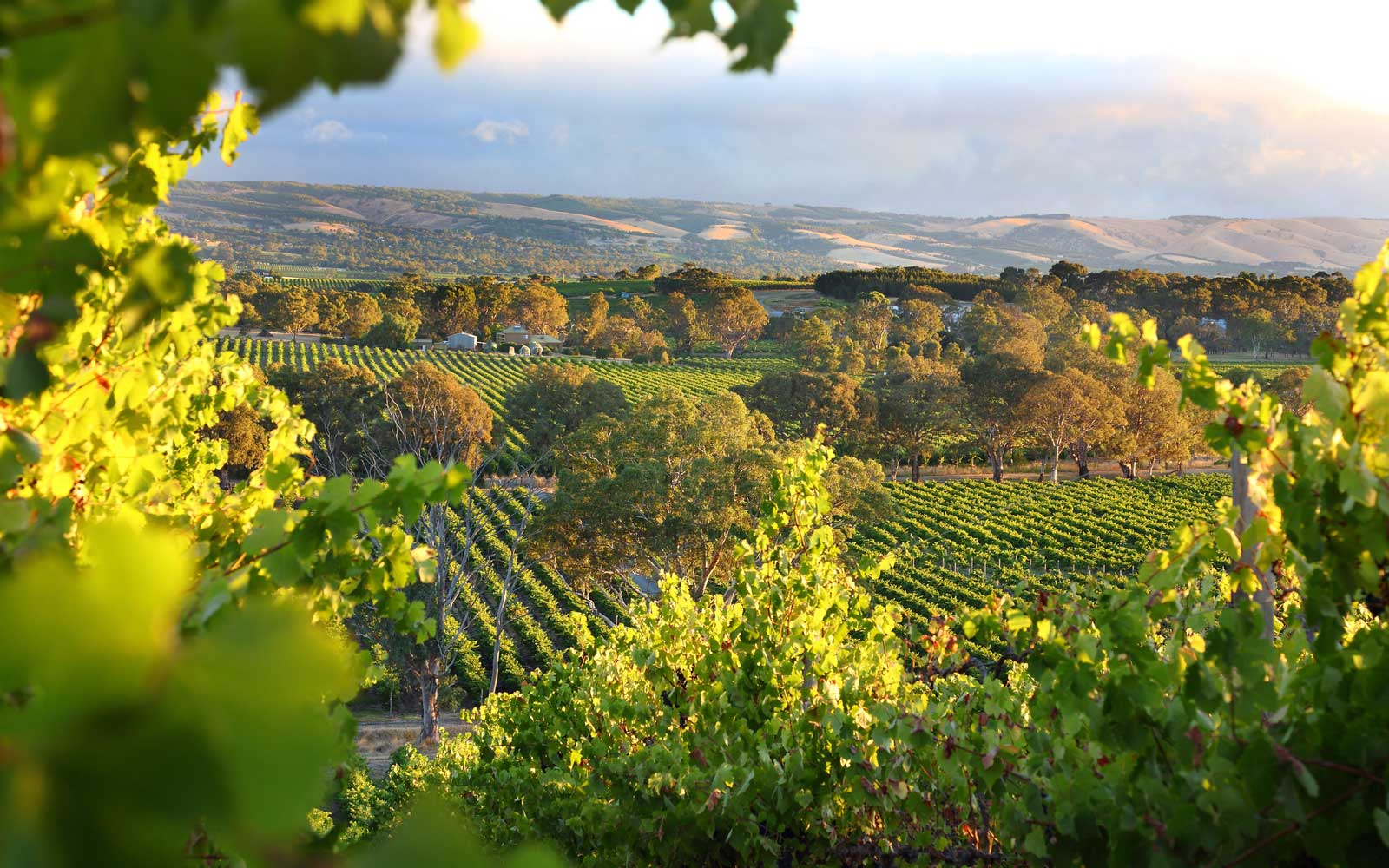 South Australia Wine Tours