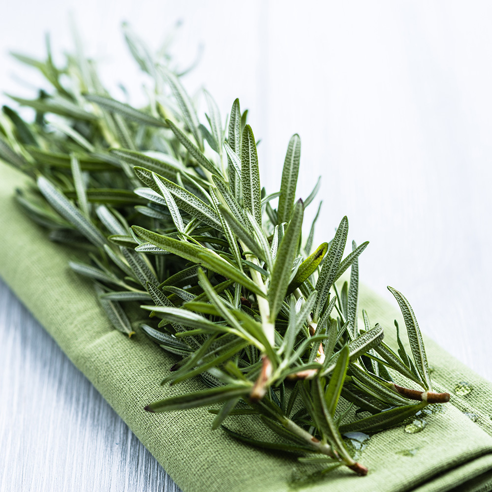 rosemary best healthy spices and herbs