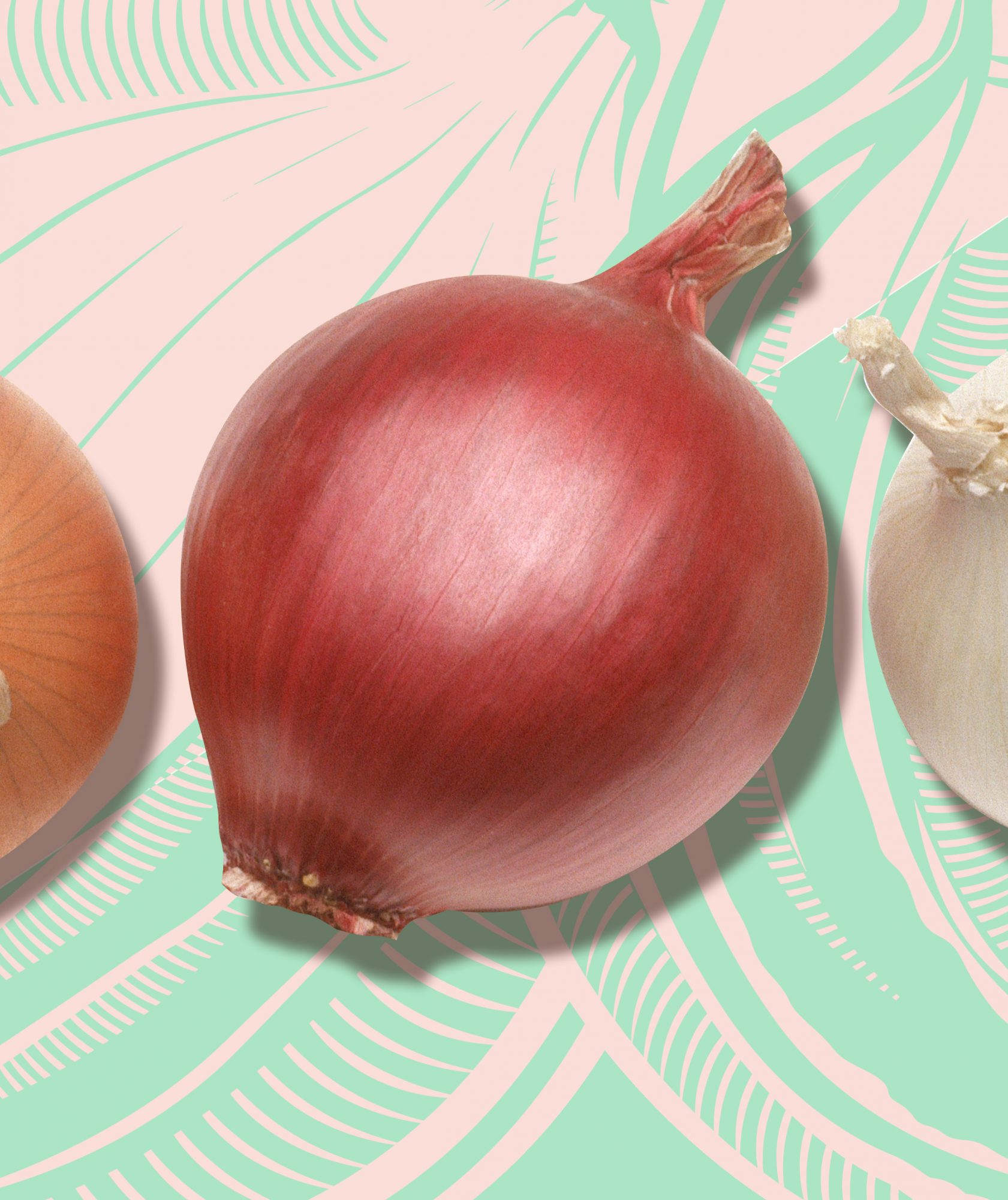 These Are the 10 Types of Onions Worthy of Your Favorite Dishes