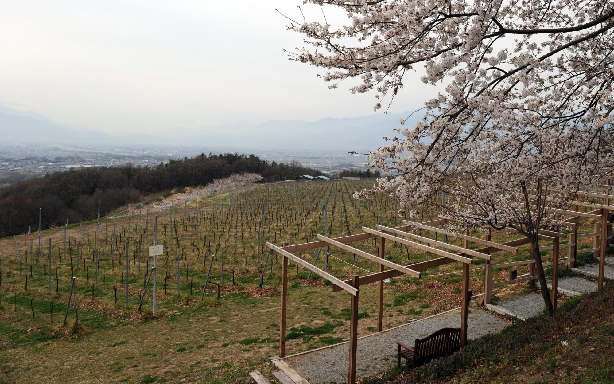 japanese wine country