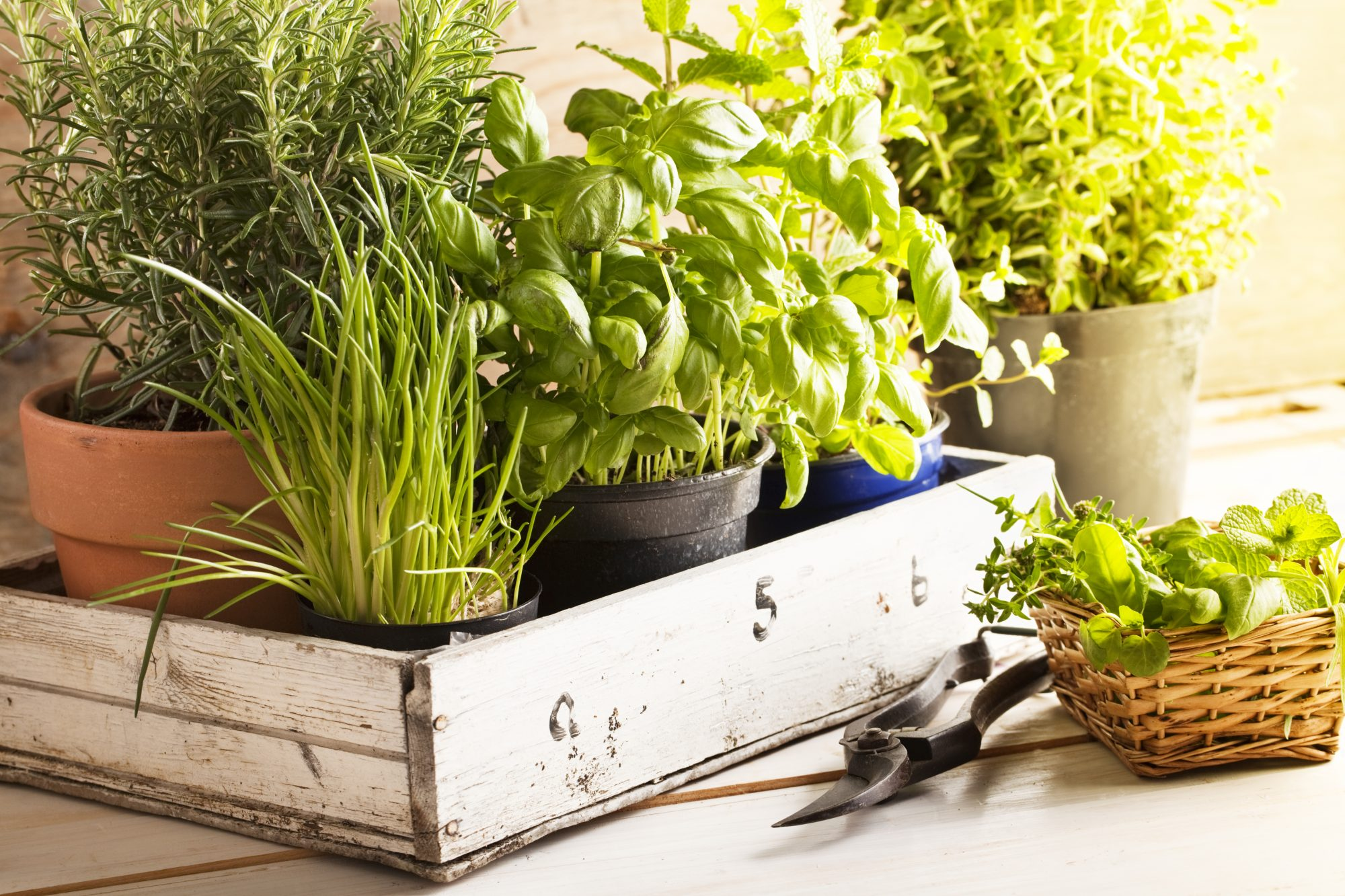What I Learned Trying and Failing to Grow Herbs Indoors