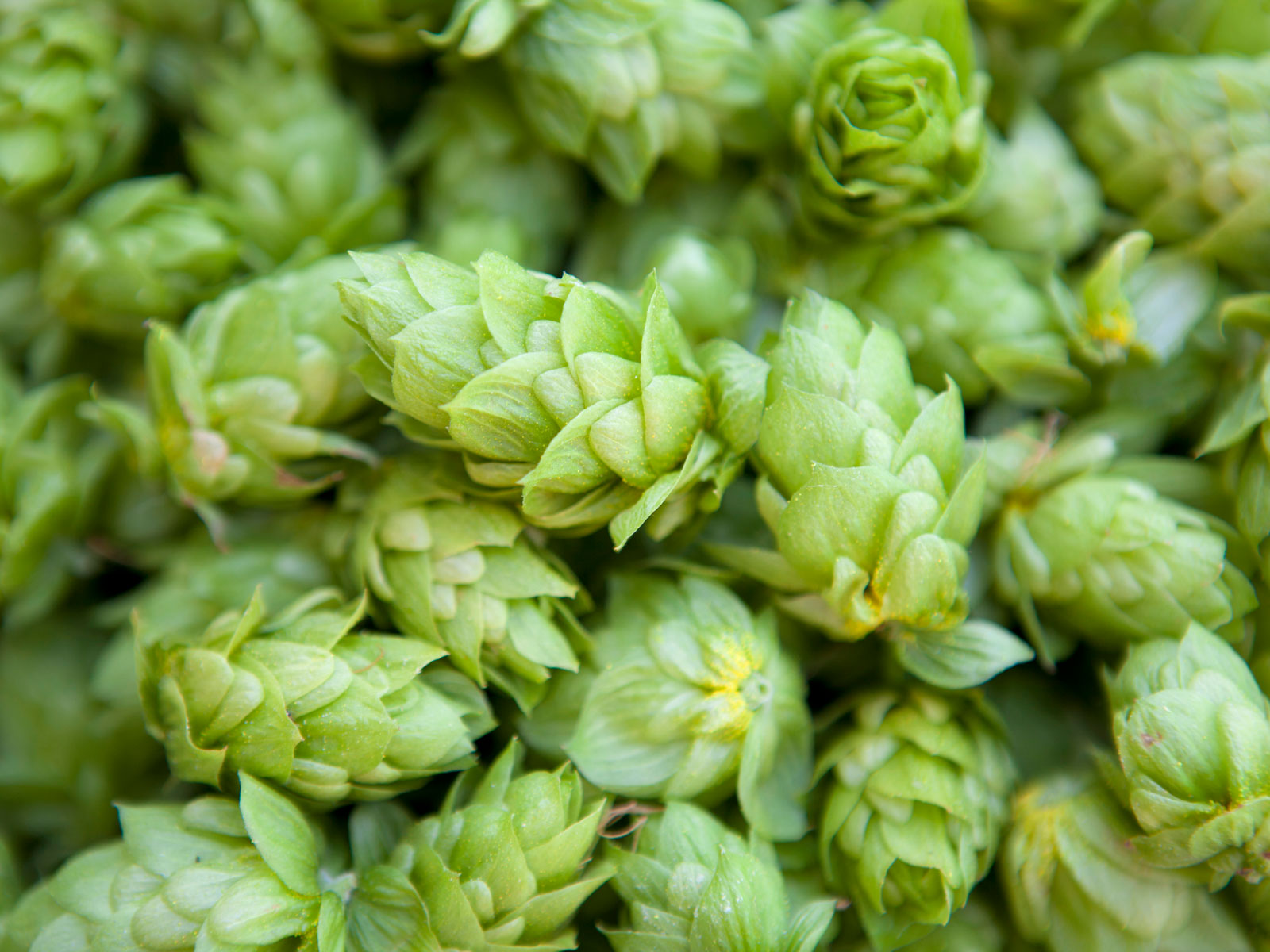 hops-year-round-FT-BLOG1119.jpg