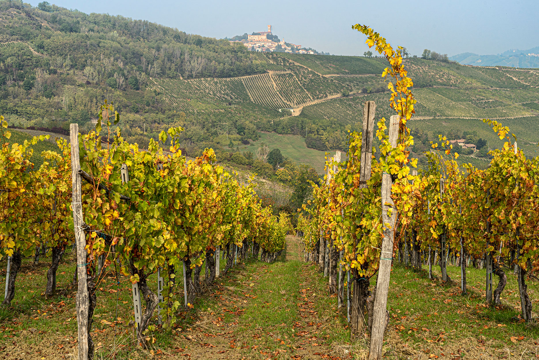 Vineyards in the Oltrepo Pavese region of Italy