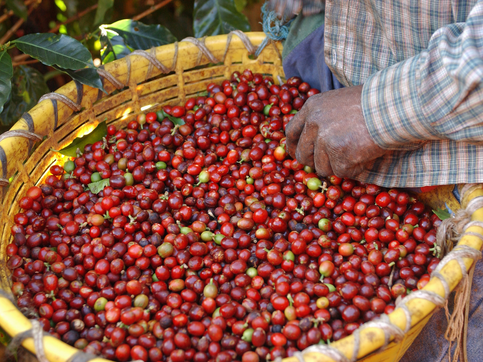 coffee-grower-origin-app-FT-BLOG0120.jpg