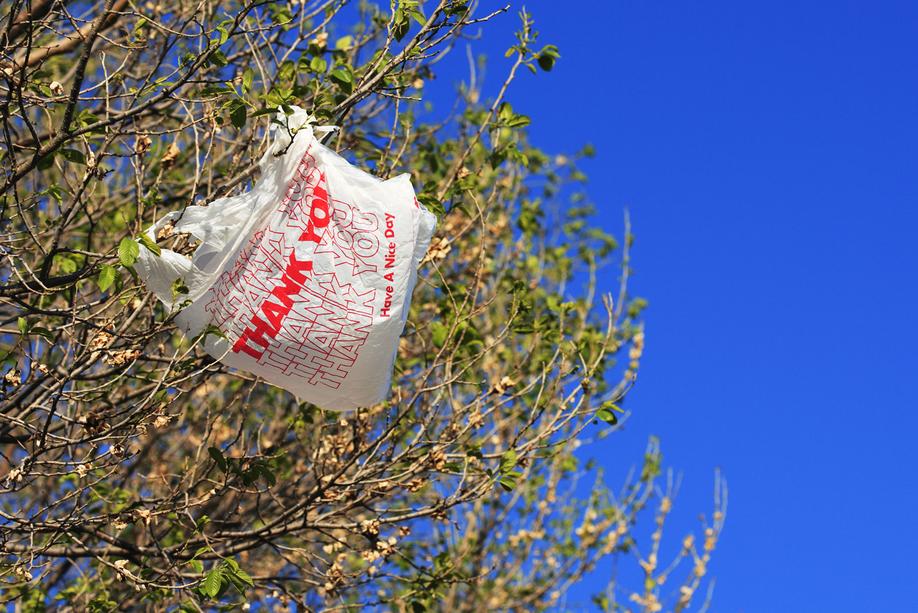 A plastic shopping bag caught in a tree