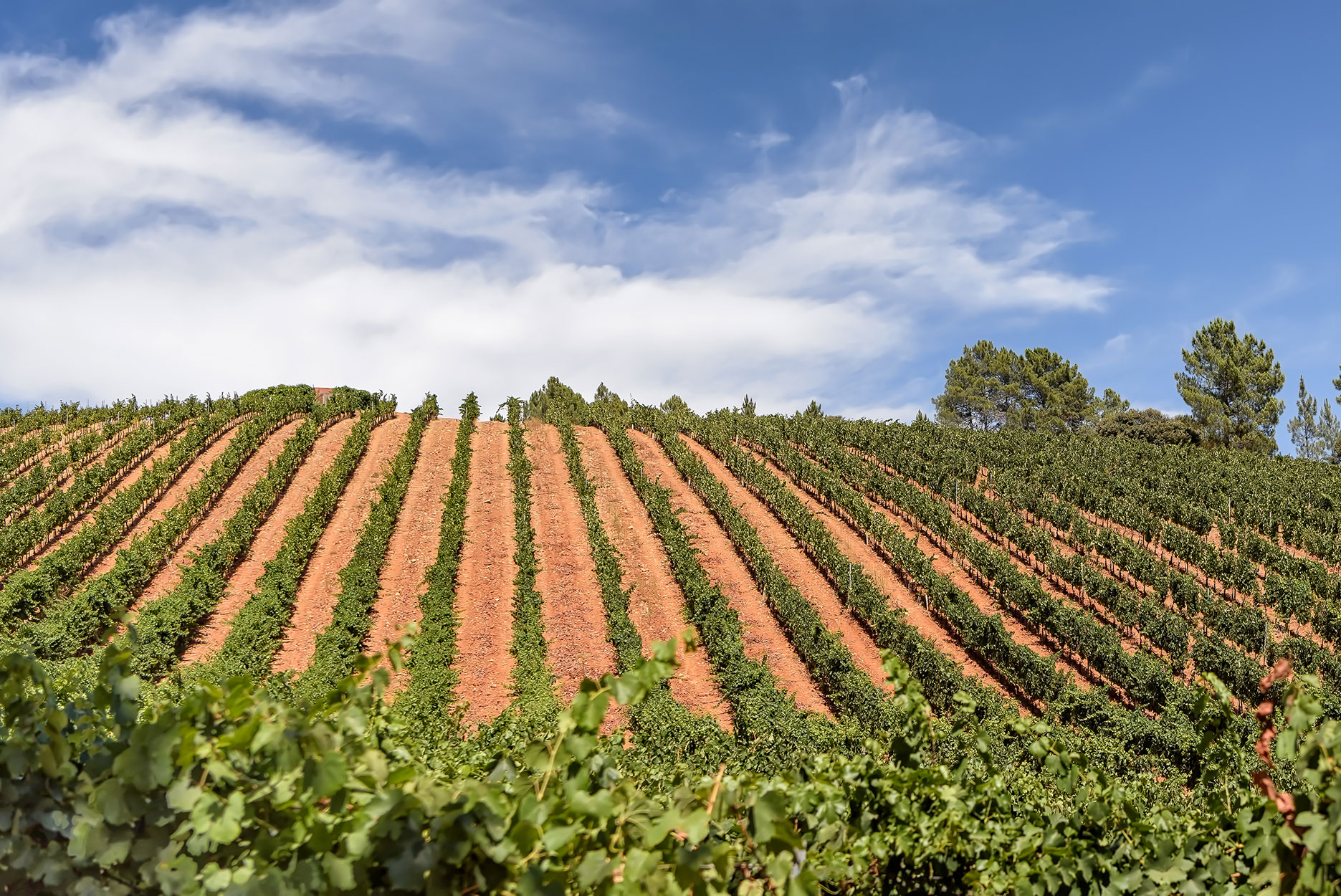 View of vineyards in Spanish winery