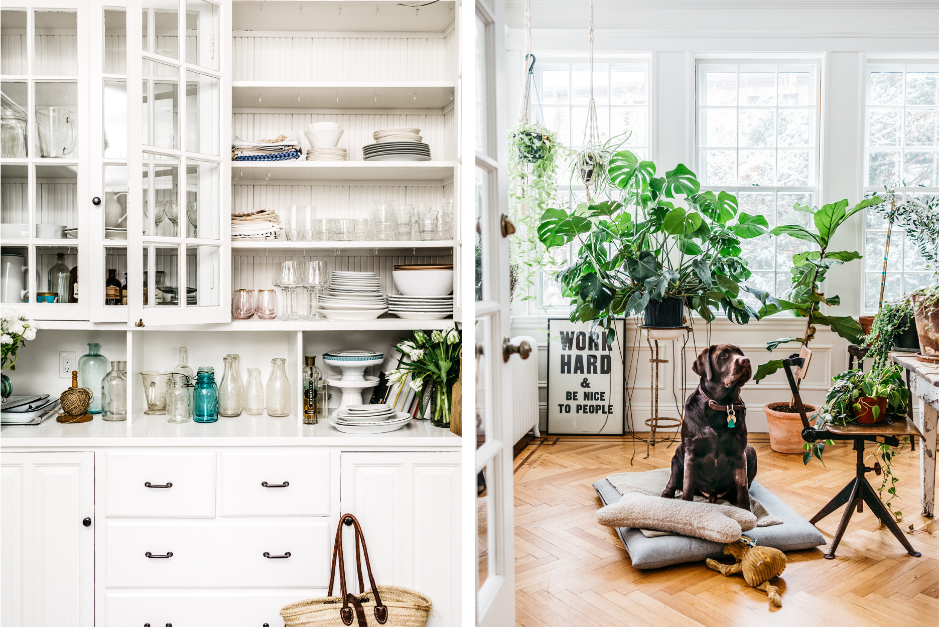 Ven If Tzurit Or Kitchen and Living Room with Dog