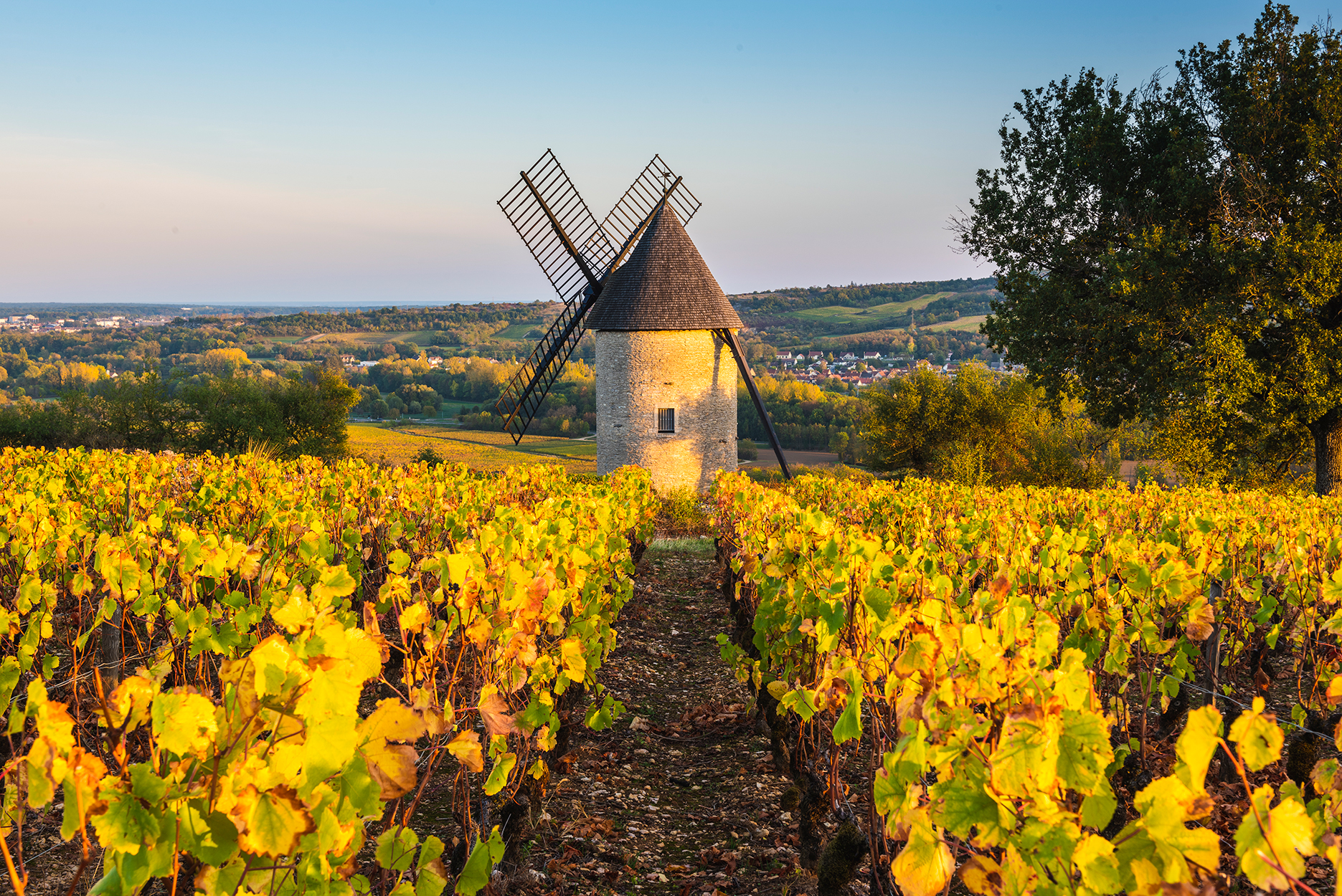 France, Bourgogne-Franche-Comte, Burgundy, Cote-d'Or, Santenay. Windmill and vineyards.