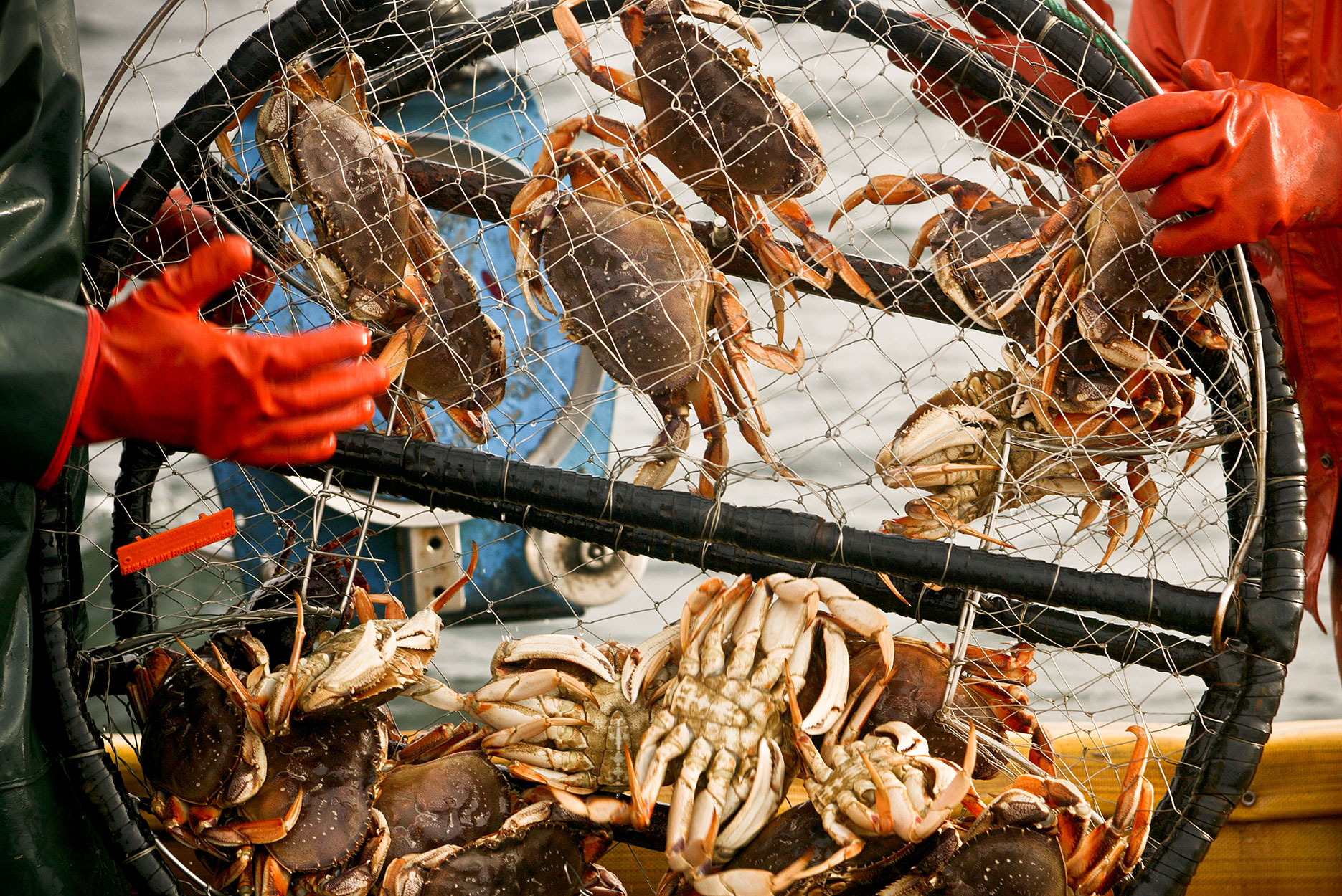Crab Pot on deck of the fishing Boat