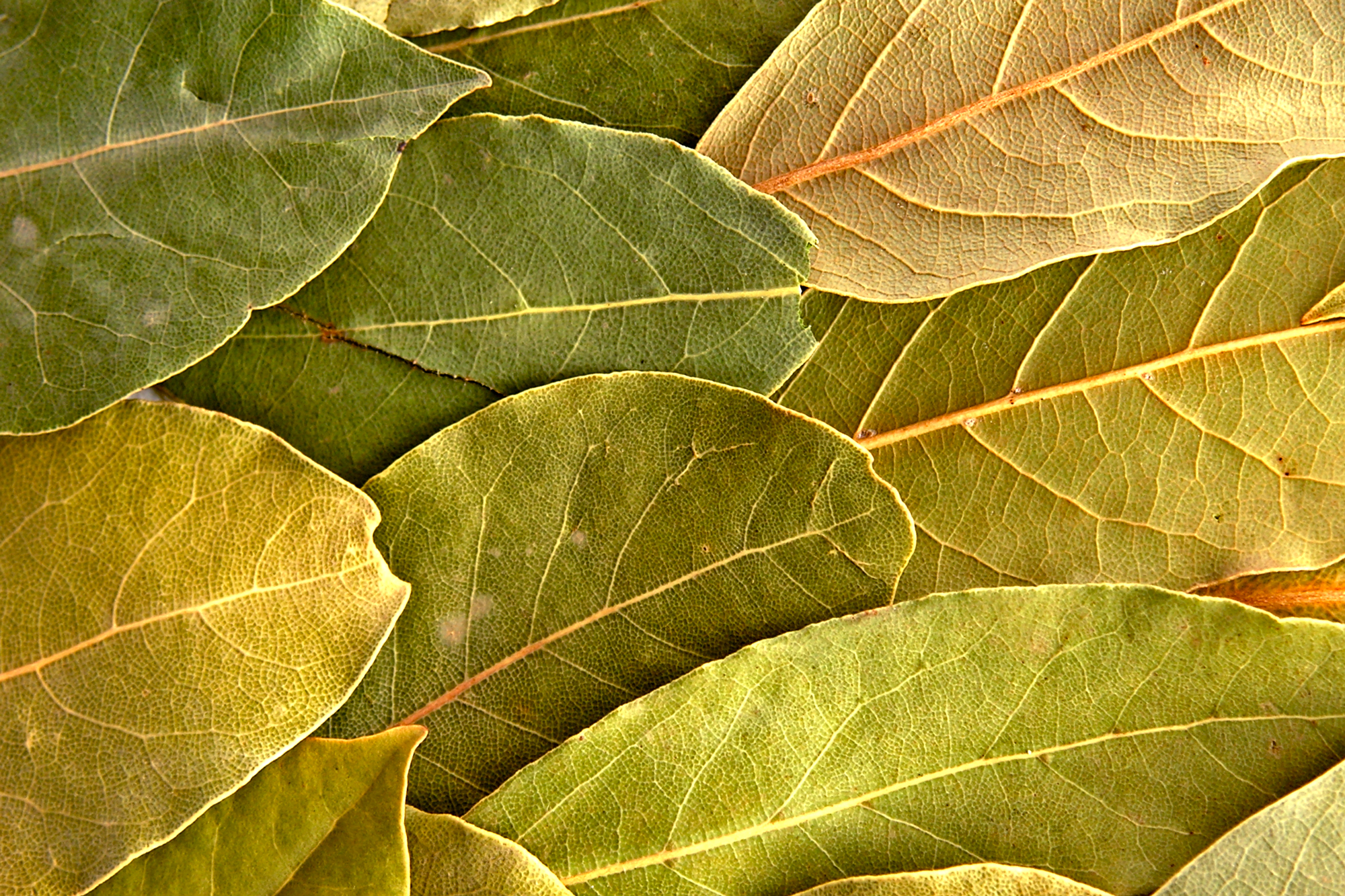 In Defense Of Bay Leaf