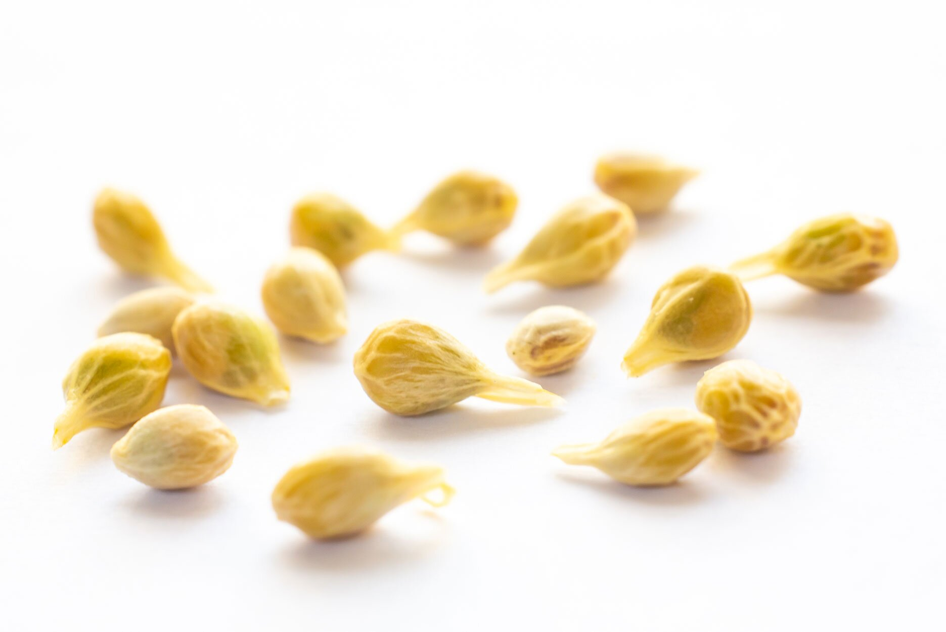 Orange fruit seeds on white background, Close up shot, Selective focus