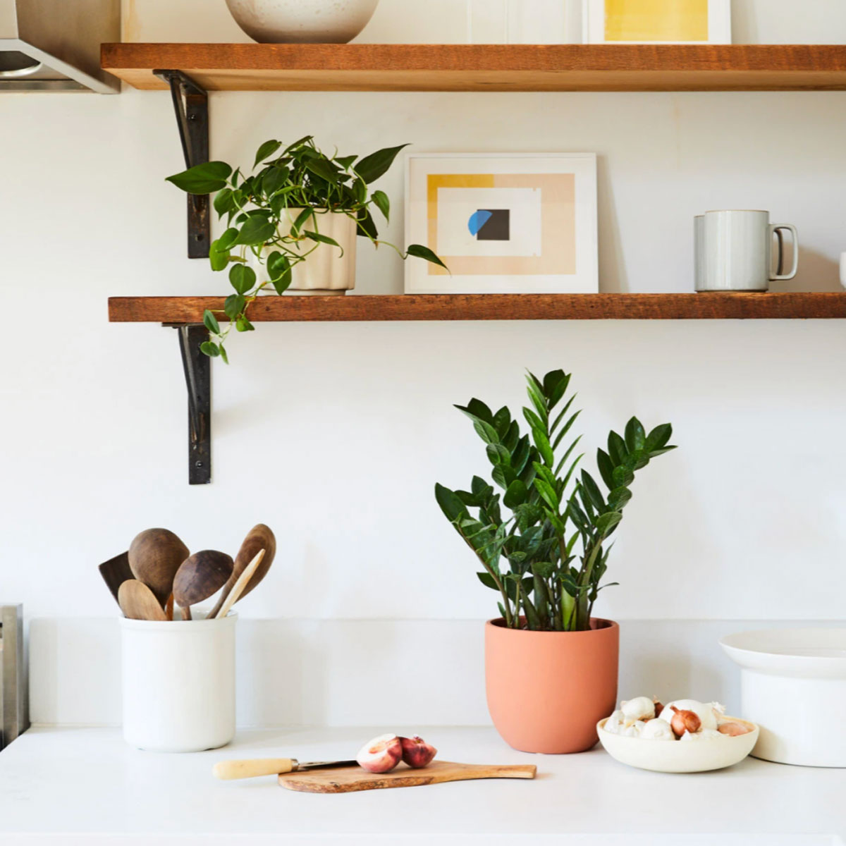 3 Best Kitchen Plants to Spruce Up Your Living Space  Food & Wine
