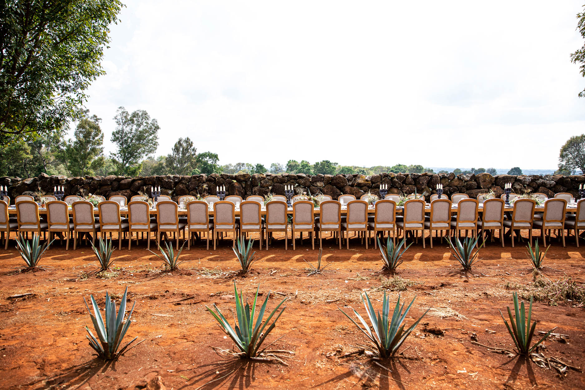 Long Dinner Table in Agave Field