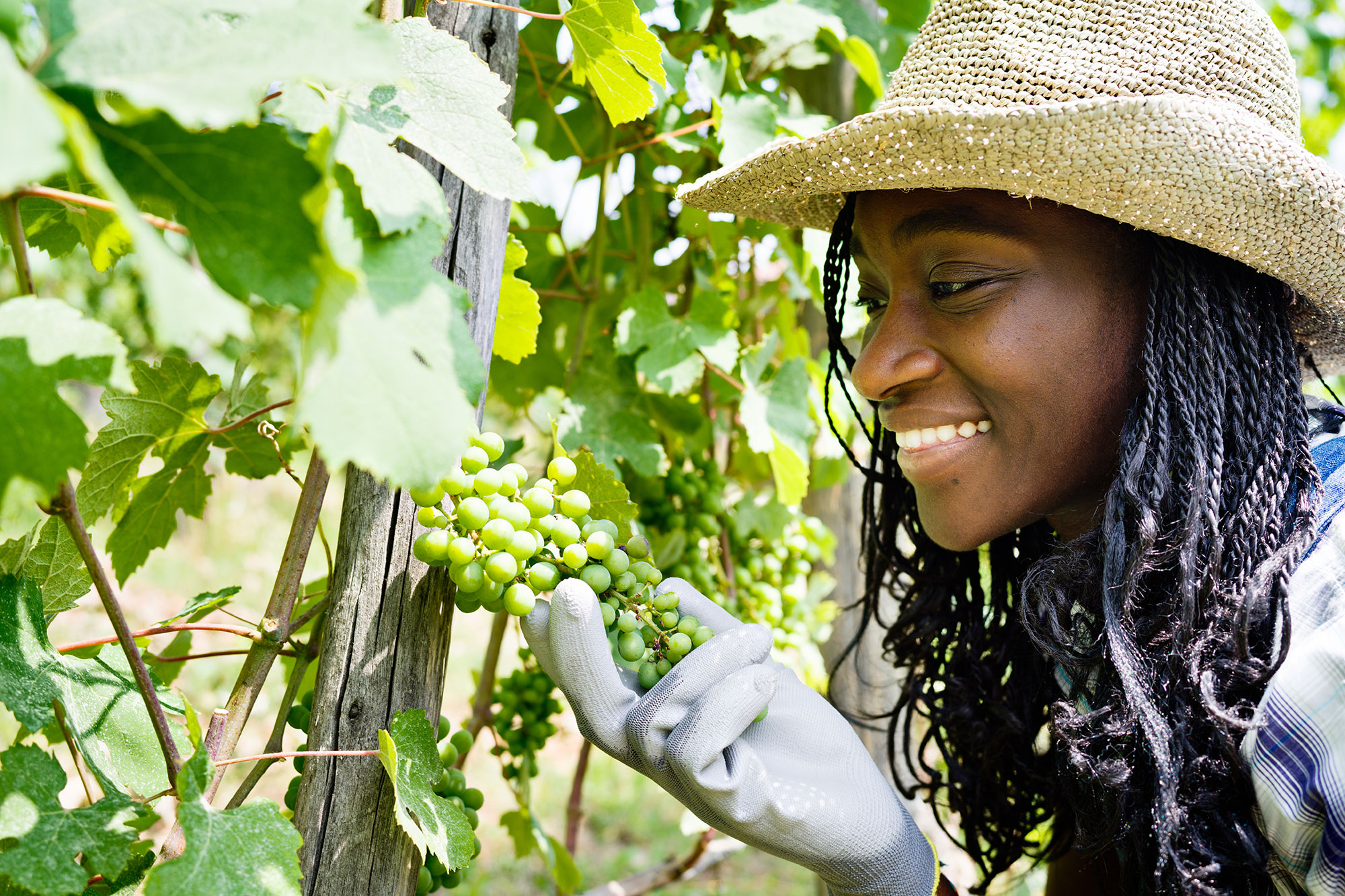 Young black agricultural woman in wineyard