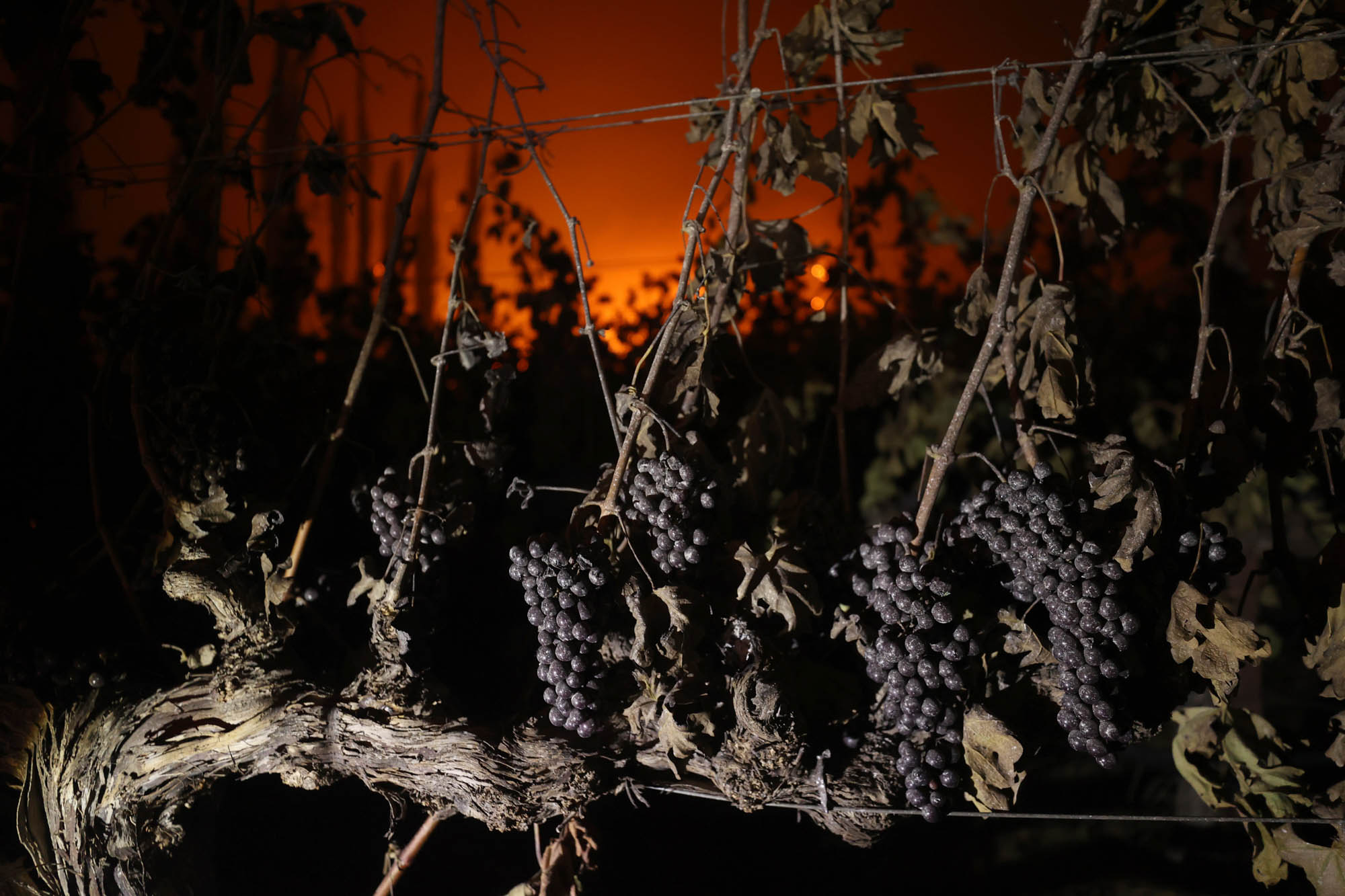 Glass Fire Burns Through Napa Valley As Hot And Dry Conditions Return To Northern California