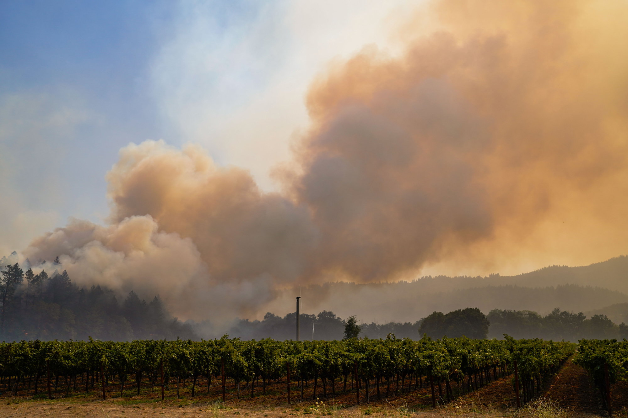Smoke obscures the trees behind a Napa vineyard