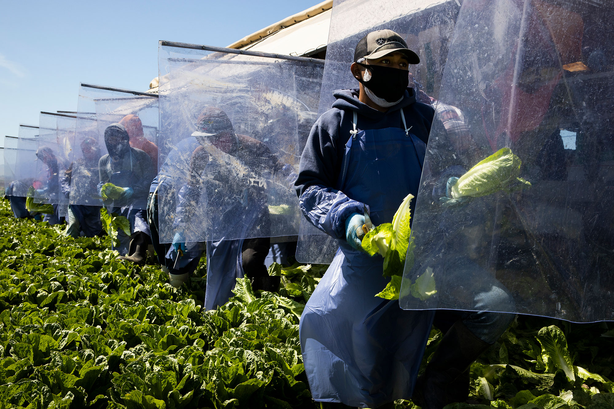 Immigrant Agricultural Workers Critical To U.S. Food Security Amid COVID-19 Outbreak