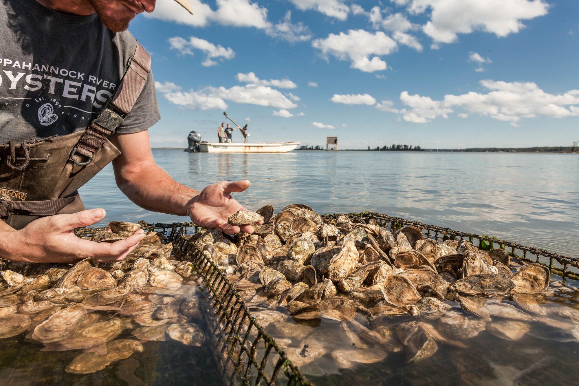 Oysters at Rappahannock Oyster Company