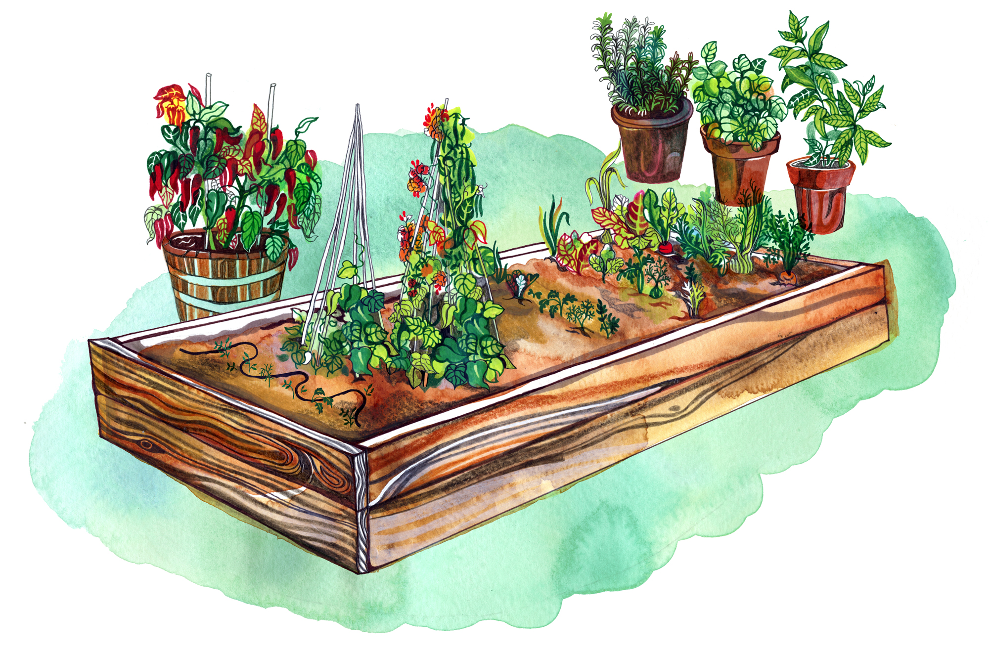 Culinary Garden Illustration