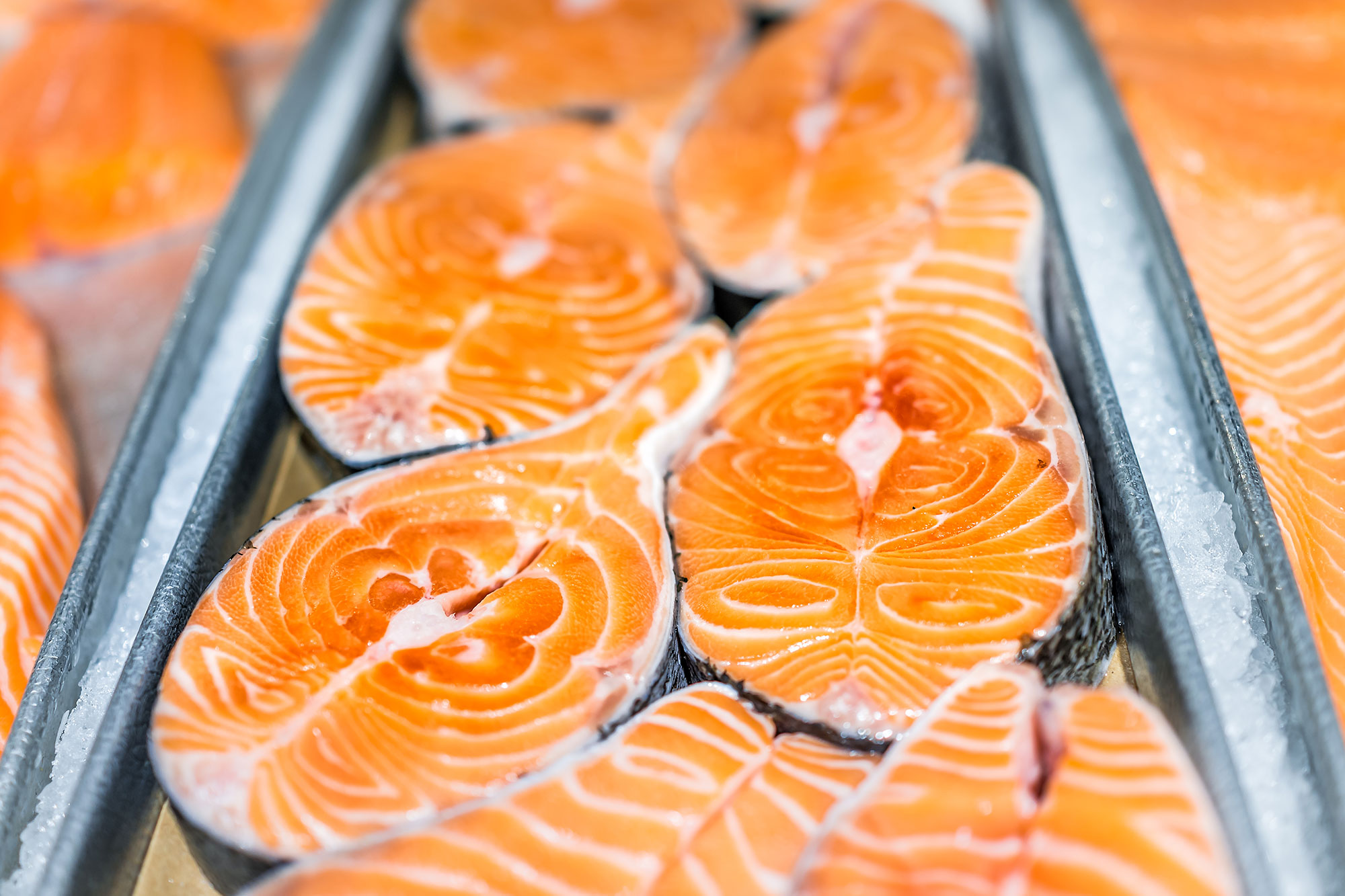 Closeup of many fresh selection salmon cut steaks fish in seafood market shop display tray orange large farm raised fat marbled
