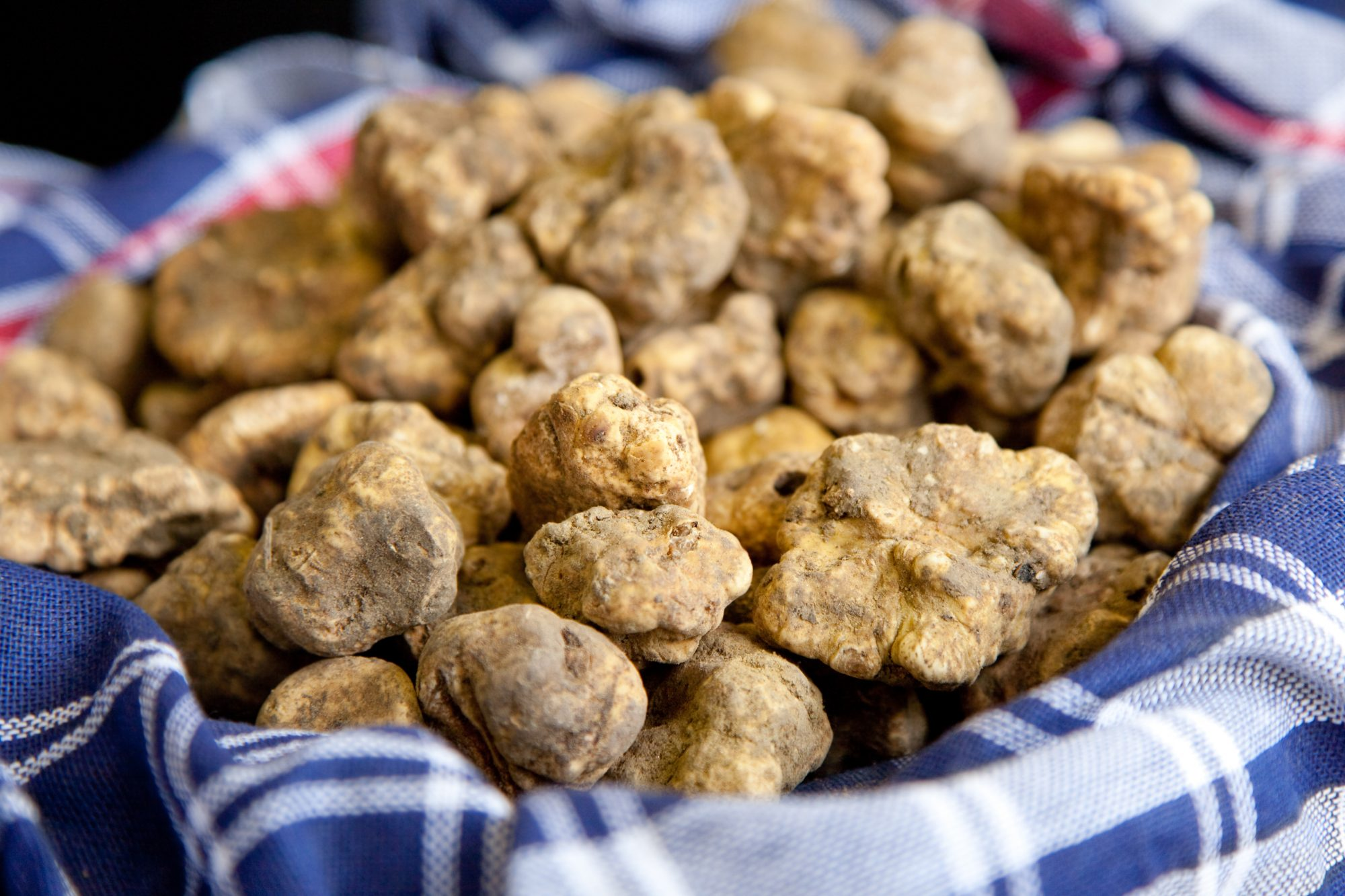 White truffles in a blue checked cloth