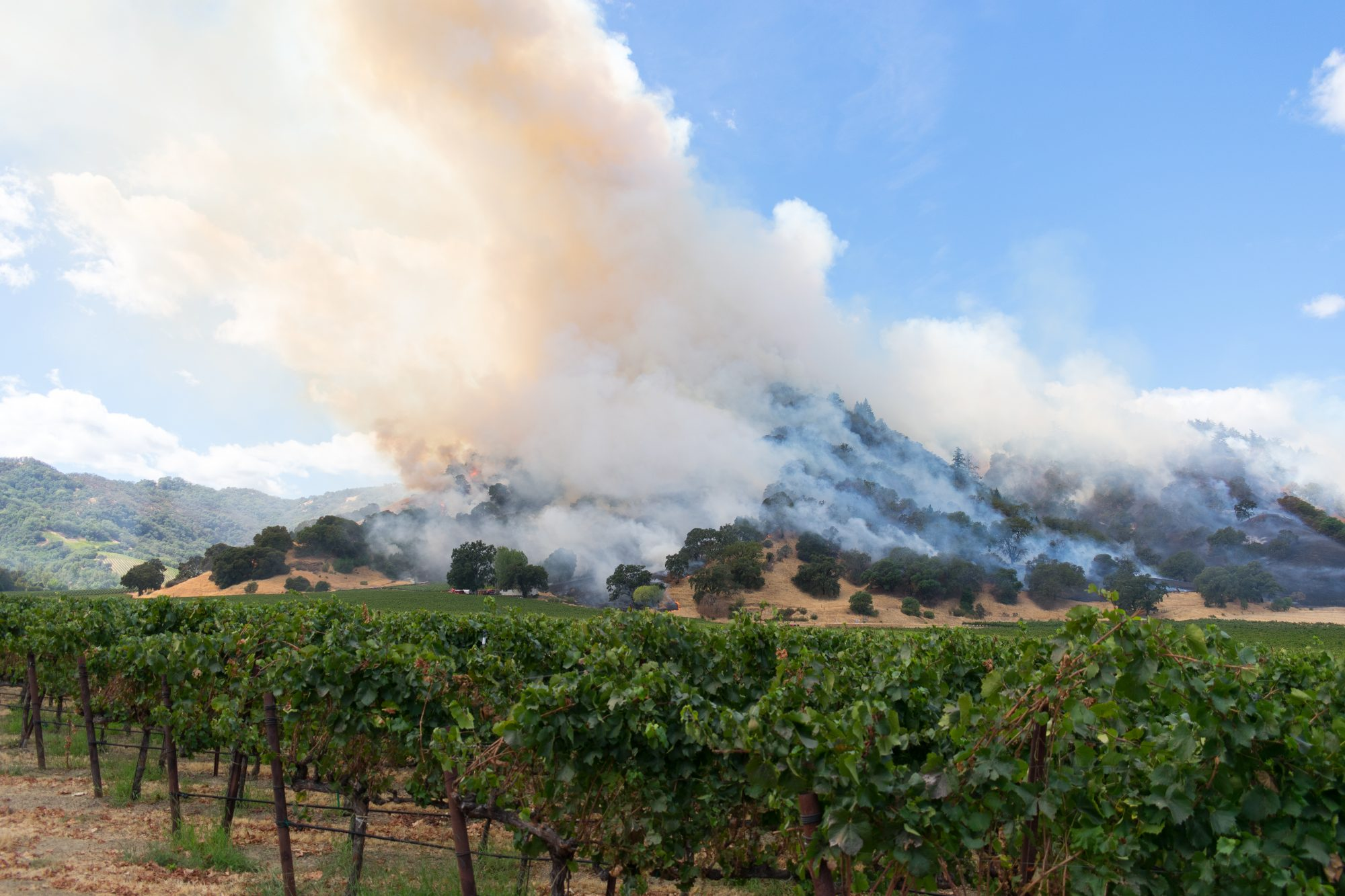 Vineyard Fire