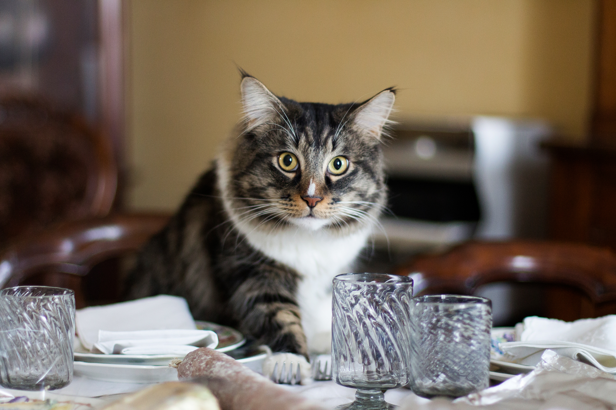 Cat on the dining table