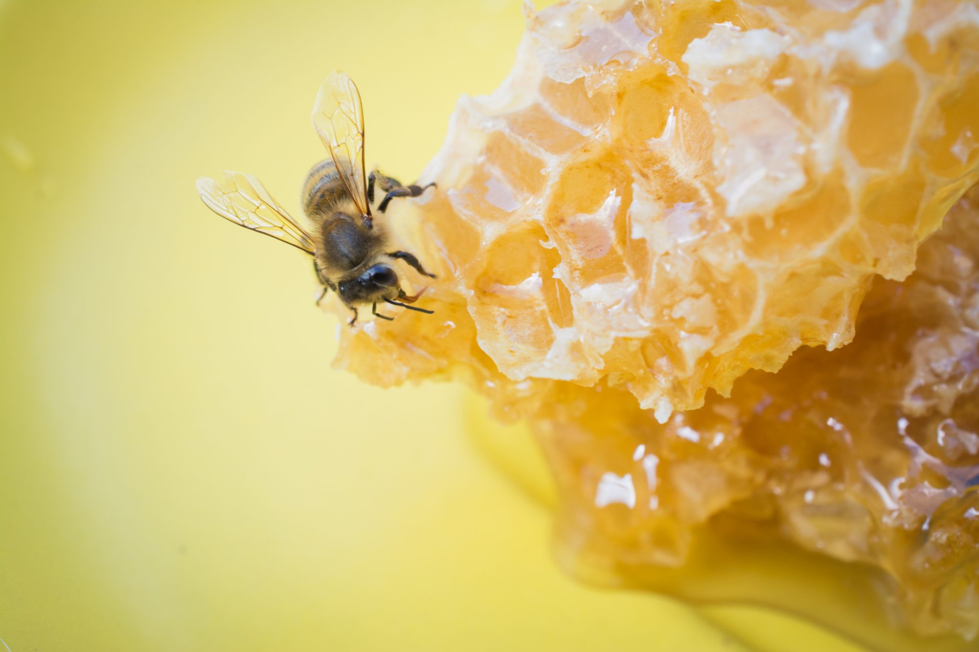 slices of fresh honey with bee