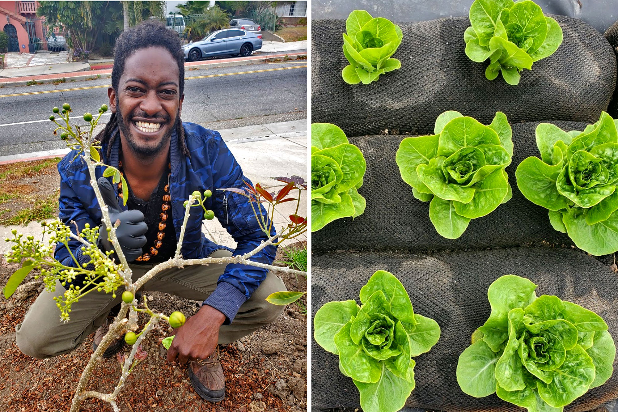 Jamiah Hargins and baby lettuces