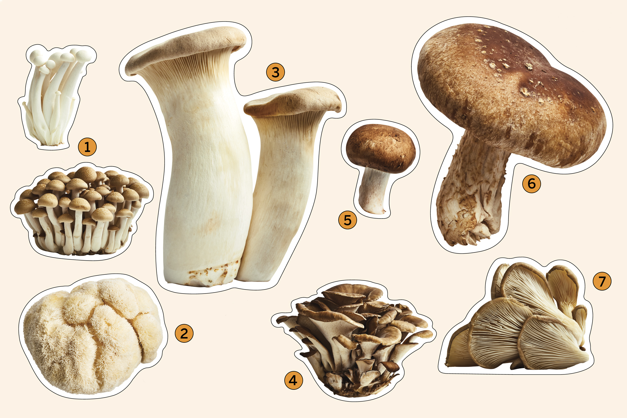 images of different types of mushrooms