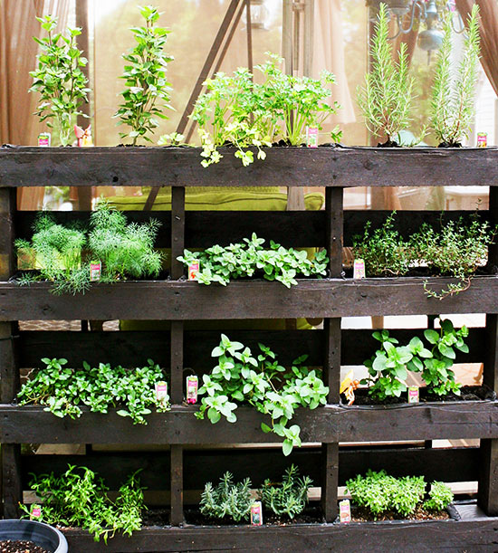 vertical garden ideas | better homes & gardens