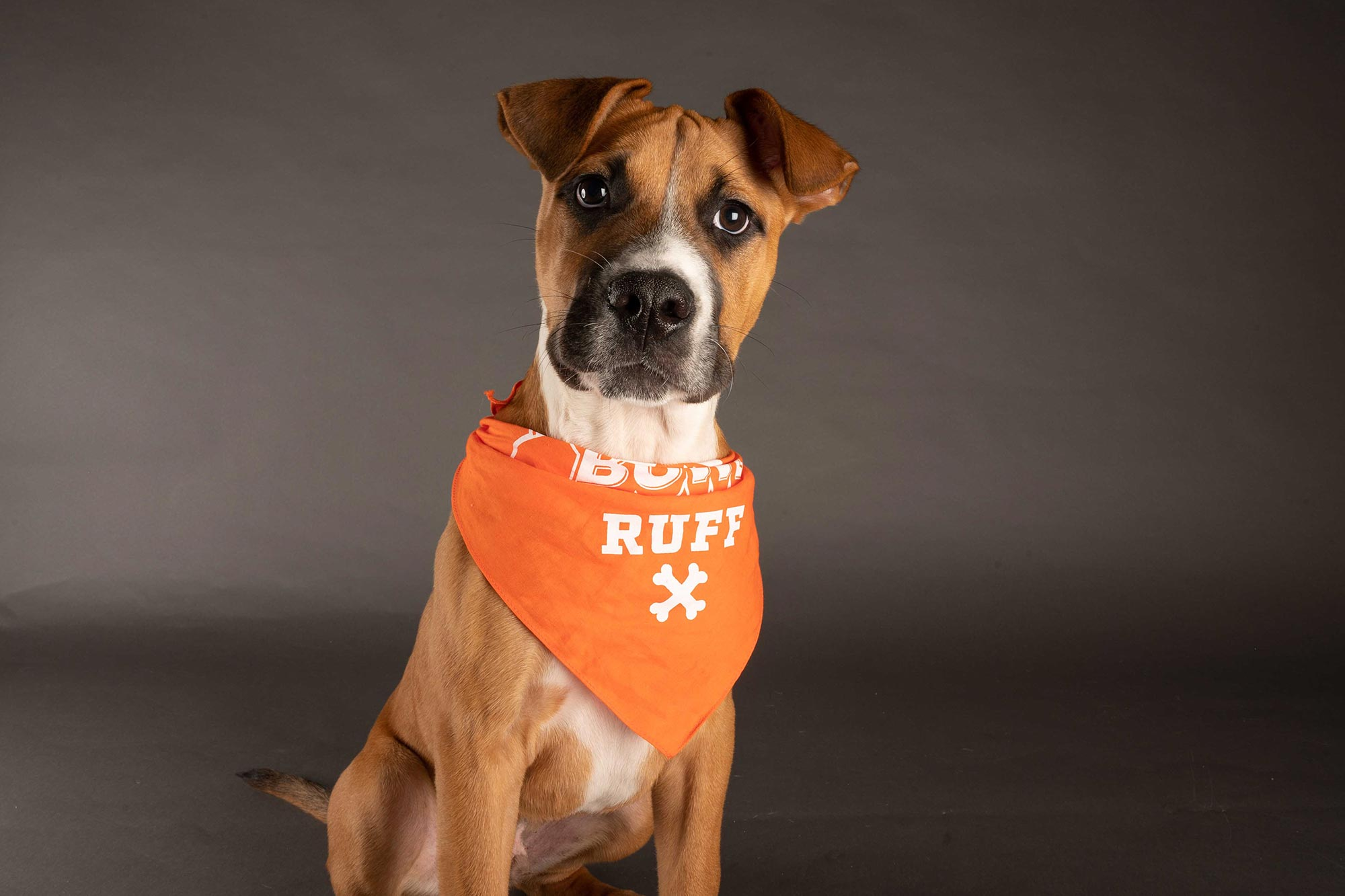 Meet the 2021 Puppy Bowl Participants on Team Ruff and ...