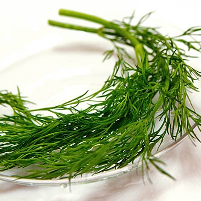 herb-dill