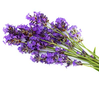 Lavender to sleep better