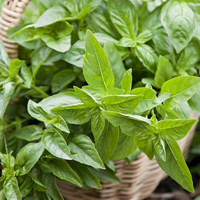 flavor-boosters-basil