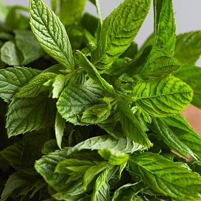 flavor-boosters-mint