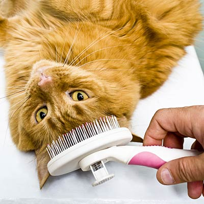 Brush your cat every day