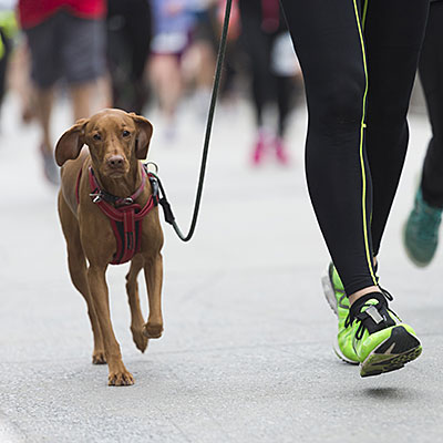 Join a canine charity race