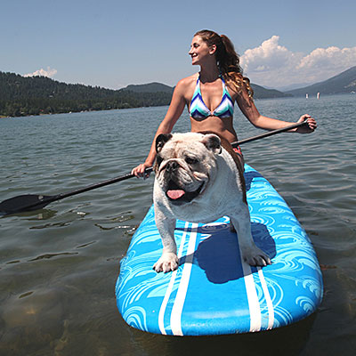 paddleboading dog