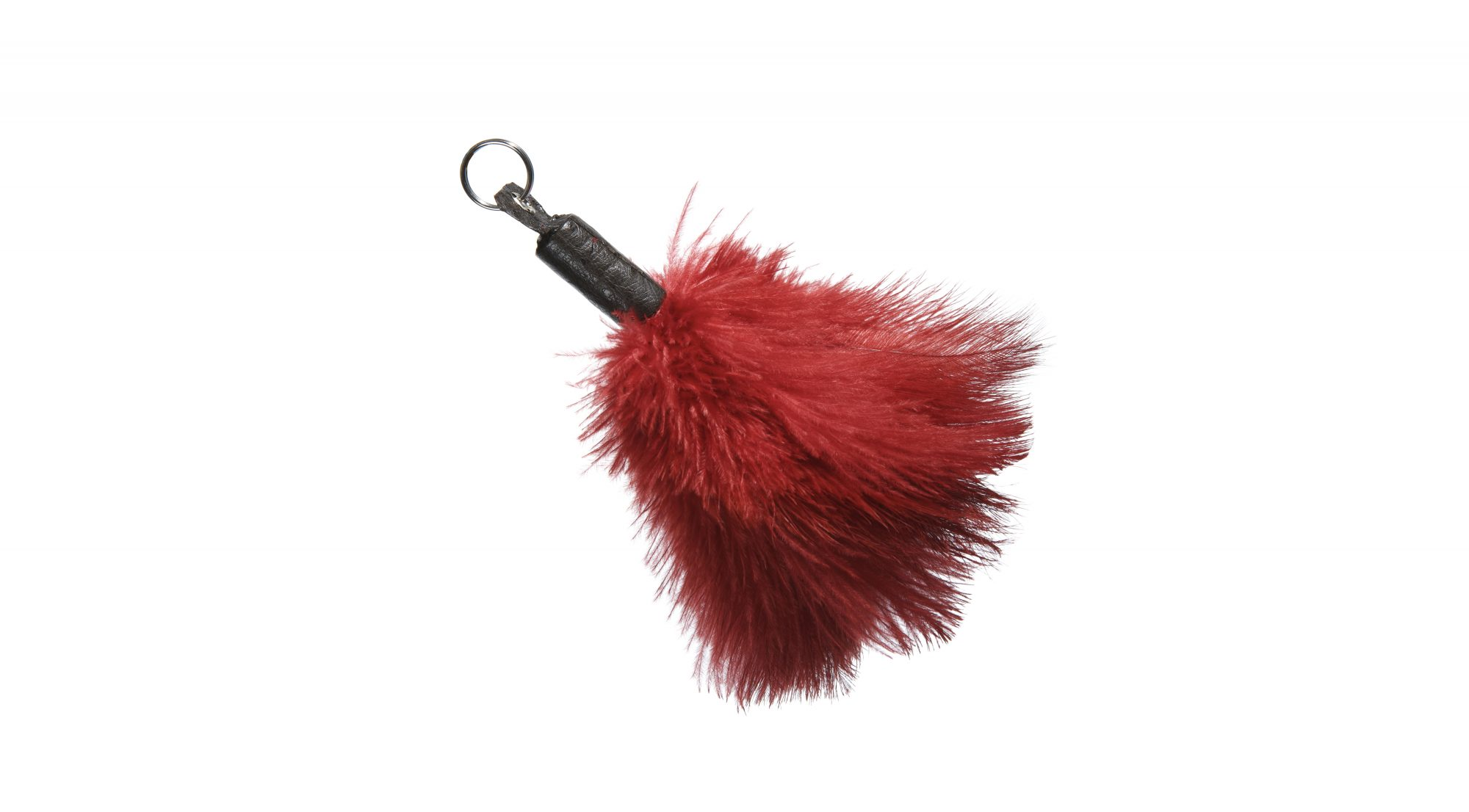 feather-duster-allergy