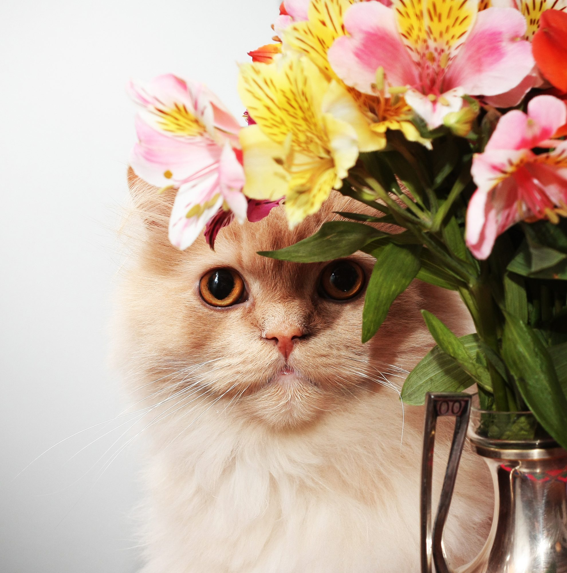 pet-allergy-flower
