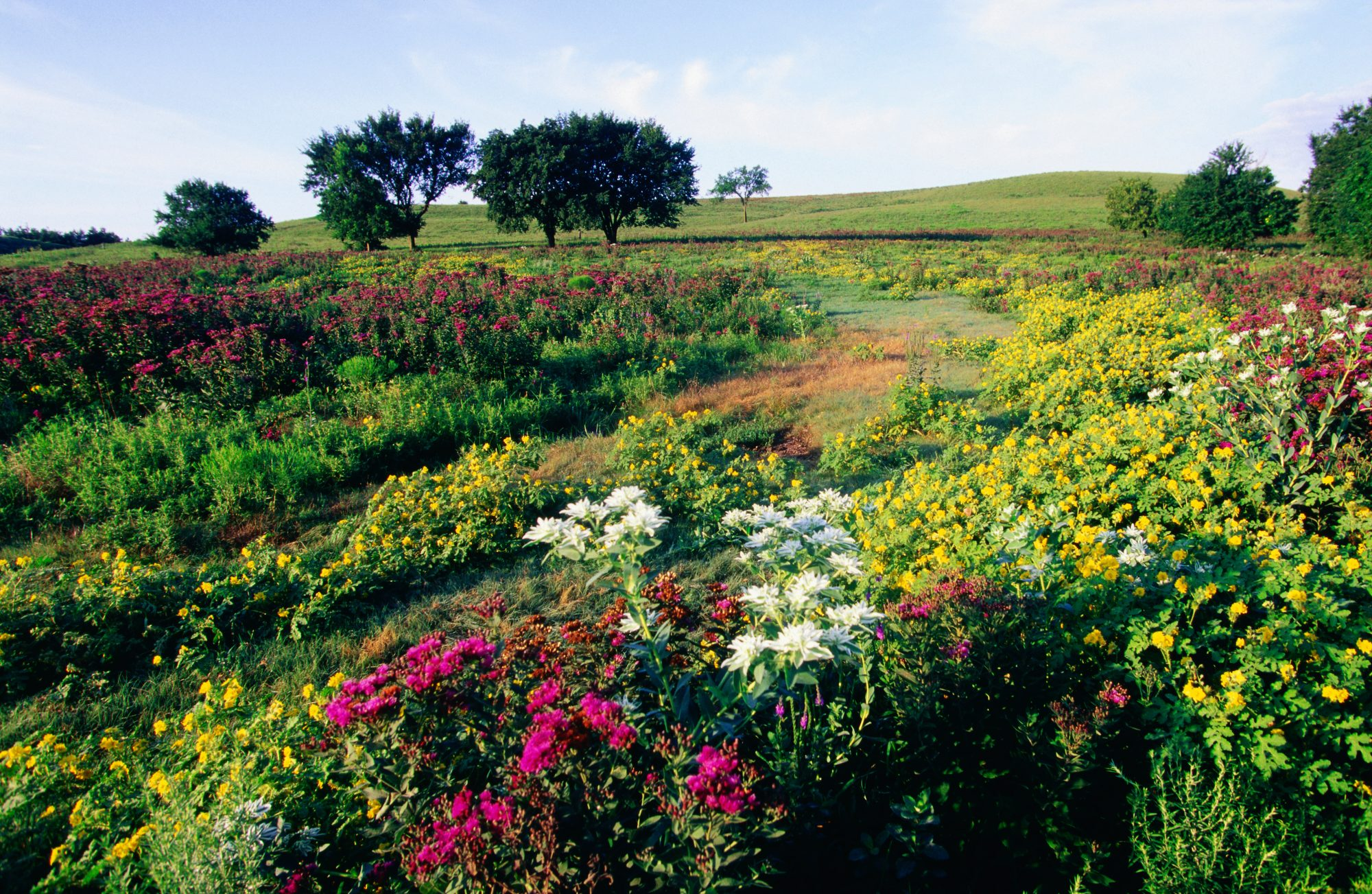 kansas-prairie-fire-palmer-creek-loop-hiking