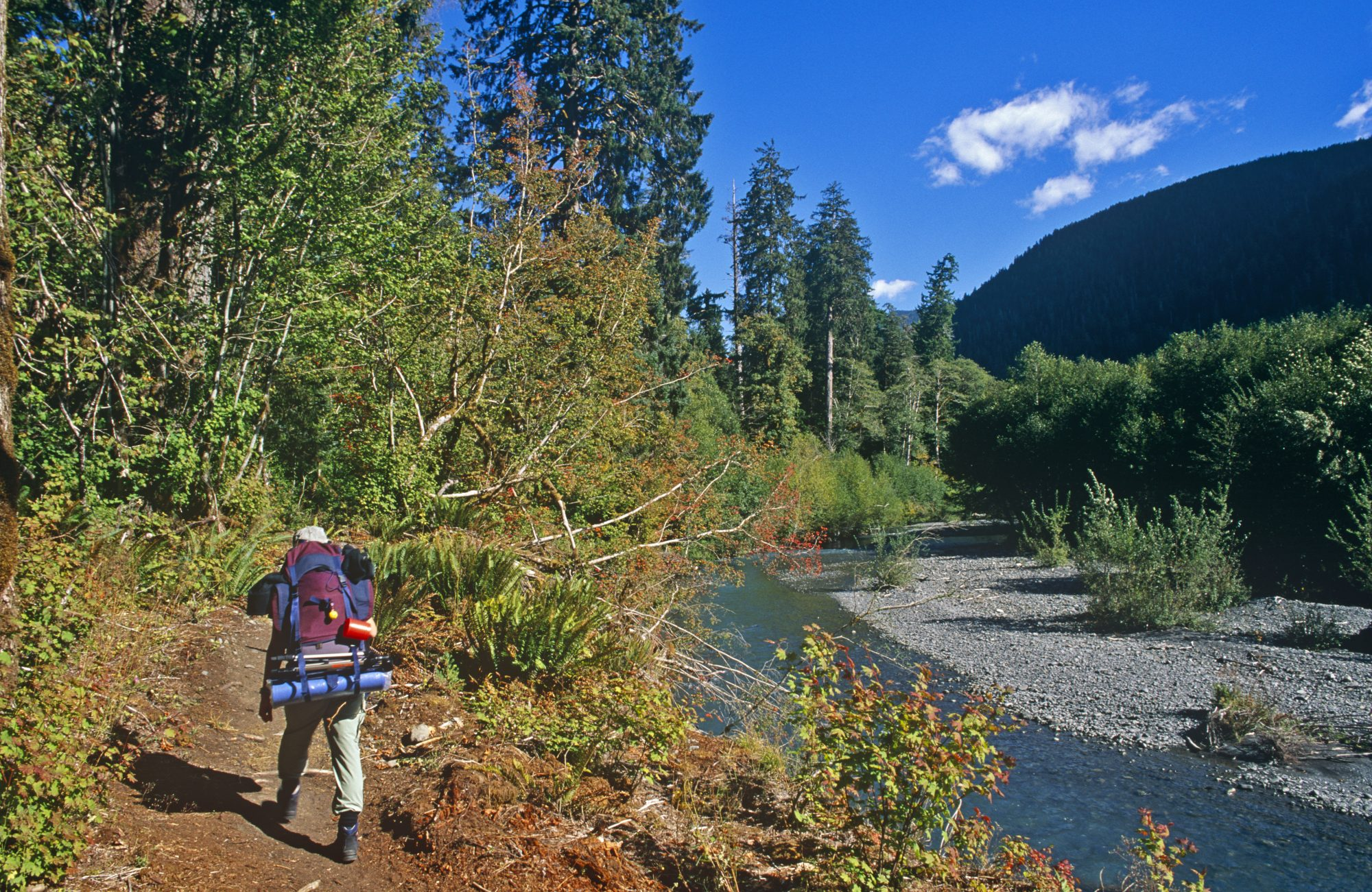 washington-hoh-river-trail-hiking