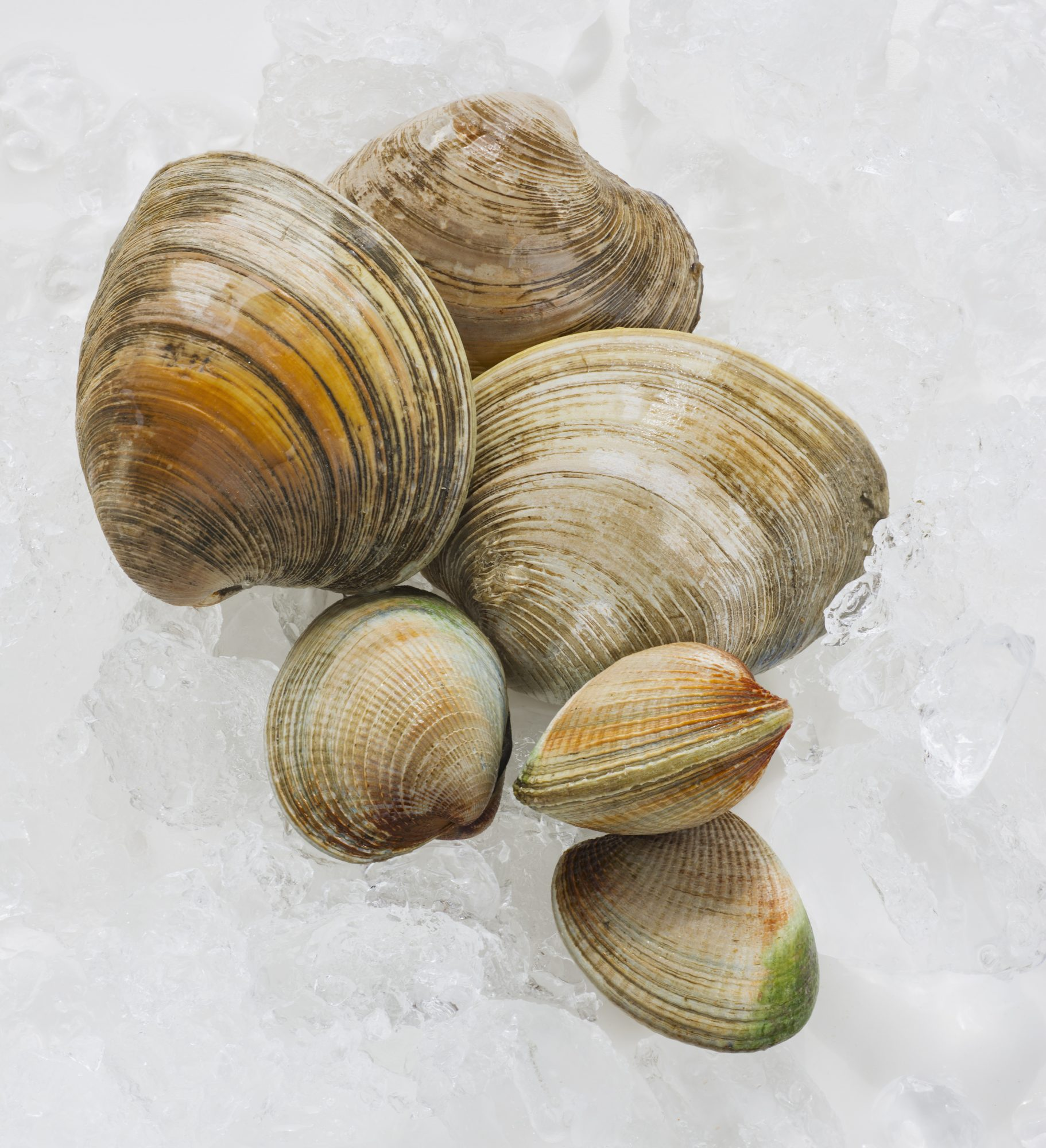 07-clams-seafood