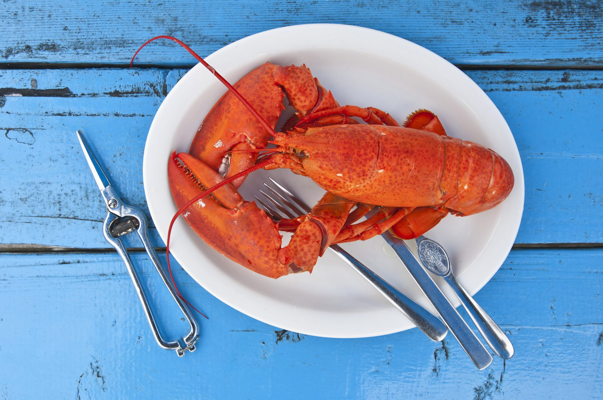 10-lobster-seafood