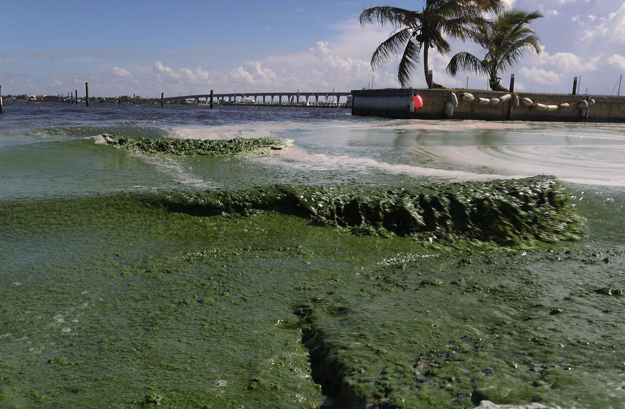 Toxic Algae Can Grow in Lakes and Ponds. Here's How to Protect Yourself
