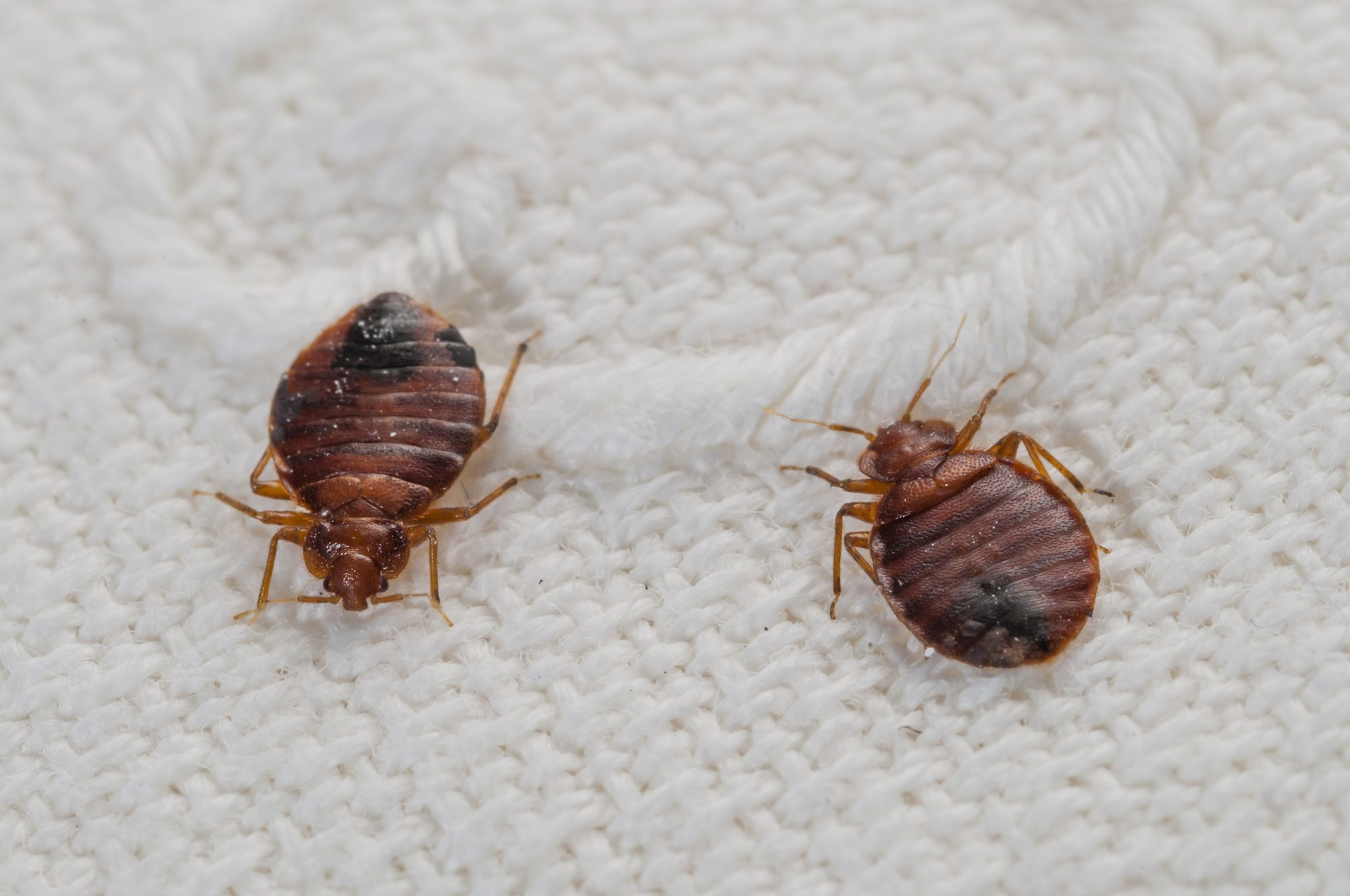 Everything You Need to Know If You Wake Up With Bed Bug Bites