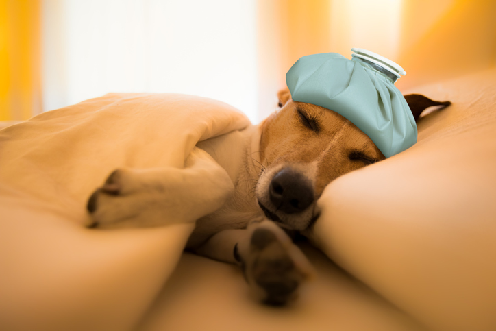 This Study Says 'Dog Flu' Could Be the Next Swine Flu. How Worried Should You Really Be?