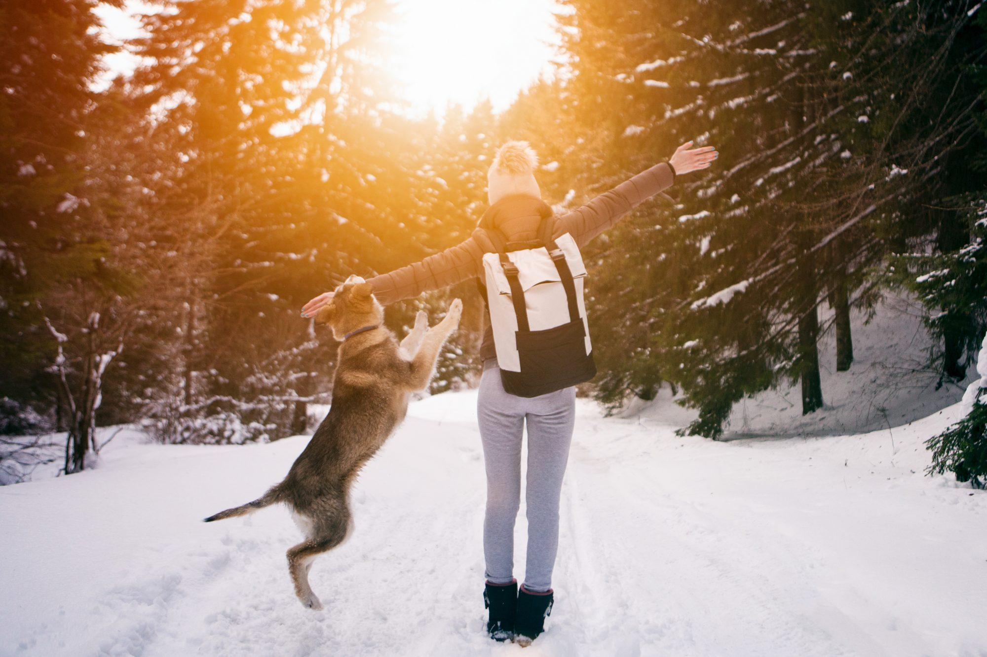 winter-dog-walk