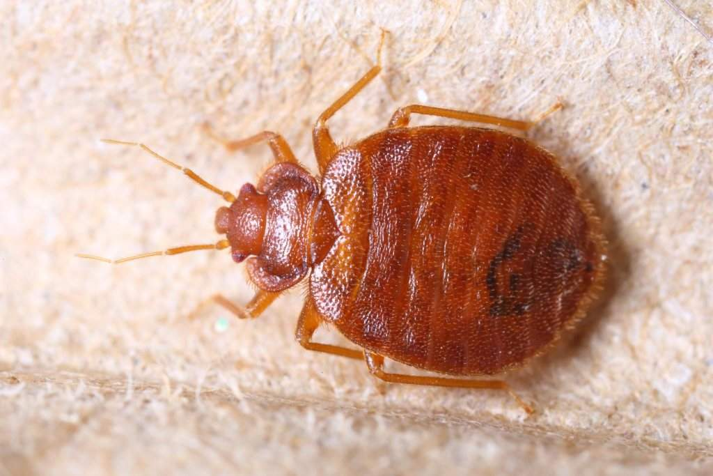 Courthouse Closes After Lawyer Walks in Swarming with Bed Bugs: 'I Don't Even Think He Cared'